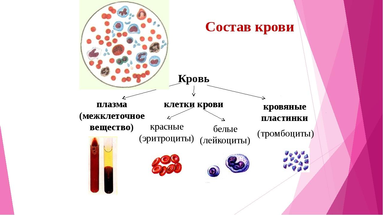 Стоимость биохимического анализа крови в москве Справка от гинеколога Чермянский проезд